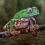 GREENFROGGY1 - Avatar